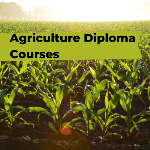 Agriculture Diploma